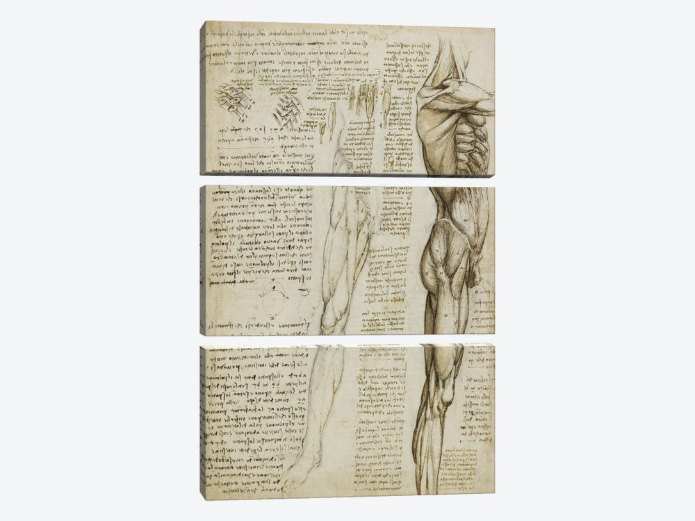 The Muscles of the Leg. 1511 by Leonardo da Vinci 3-piece Canvas Wall Art