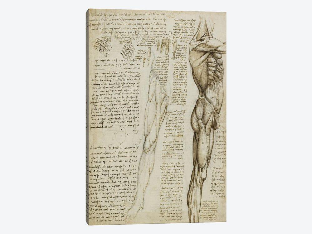 The Muscles of the Leg. 1511 by Leonardo da Vinci 1-piece Canvas Art
