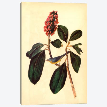 Warbler Canvas Print #1724} by John James Audubon Canvas Artwork