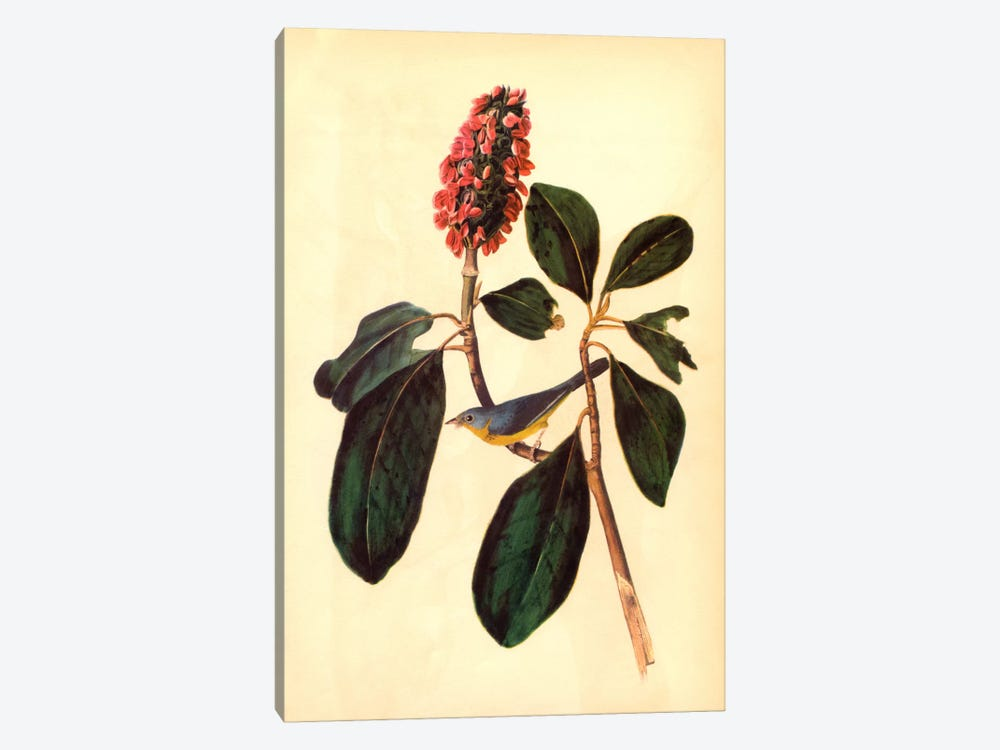 Warbler by John James Audubon 1-piece Canvas Art Print