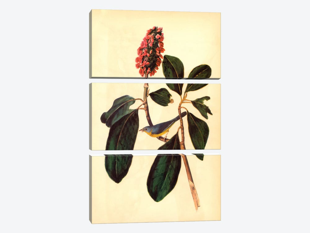 Warbler by John James Audubon 3-piece Canvas Print