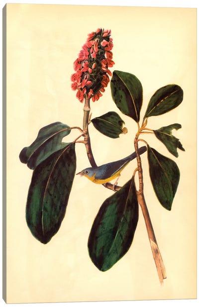 Warbler Canvas Art Print