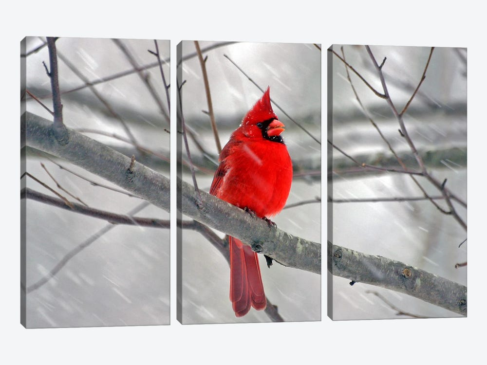 Cardinal Bird 3-piece Canvas Art