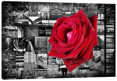 Rose In City Canvas Art Print