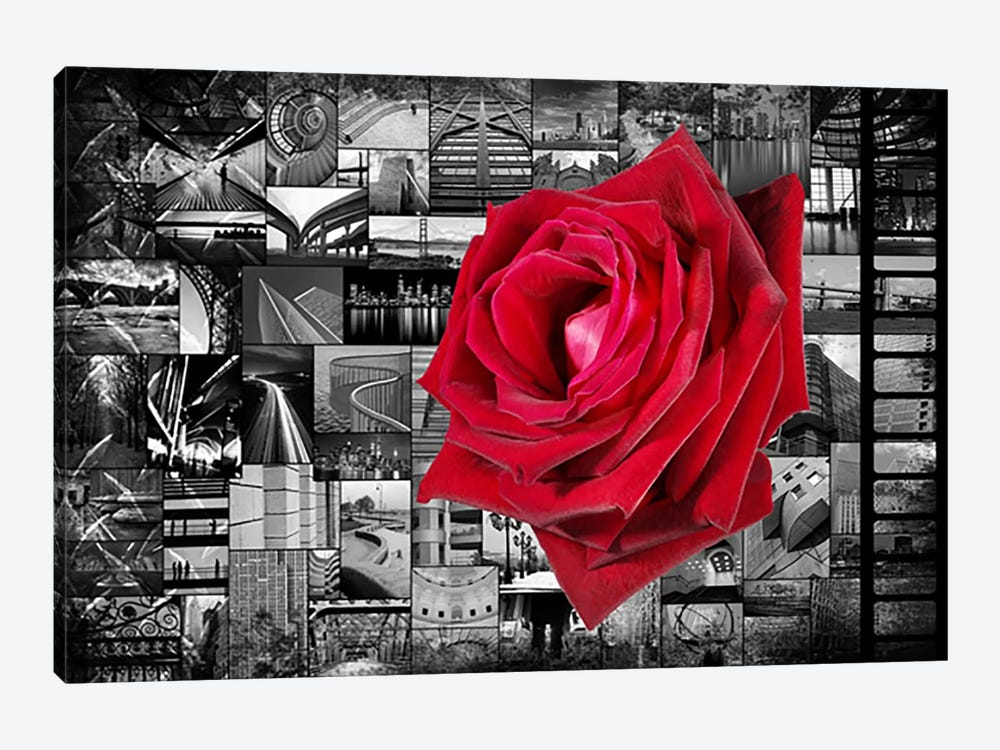 Rose In City by Unknown Artist 1-piece Canvas Print