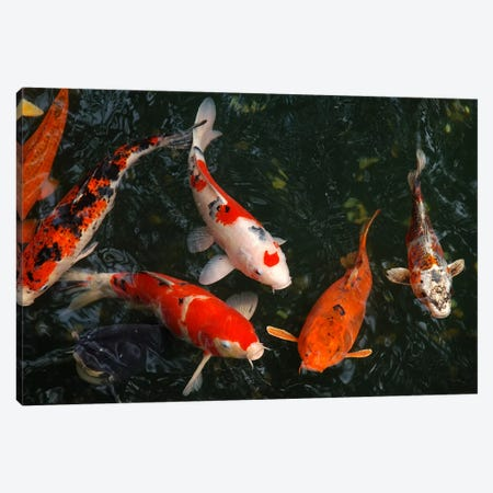 Koi Carp In Japan Canvas Print #21} Art Print