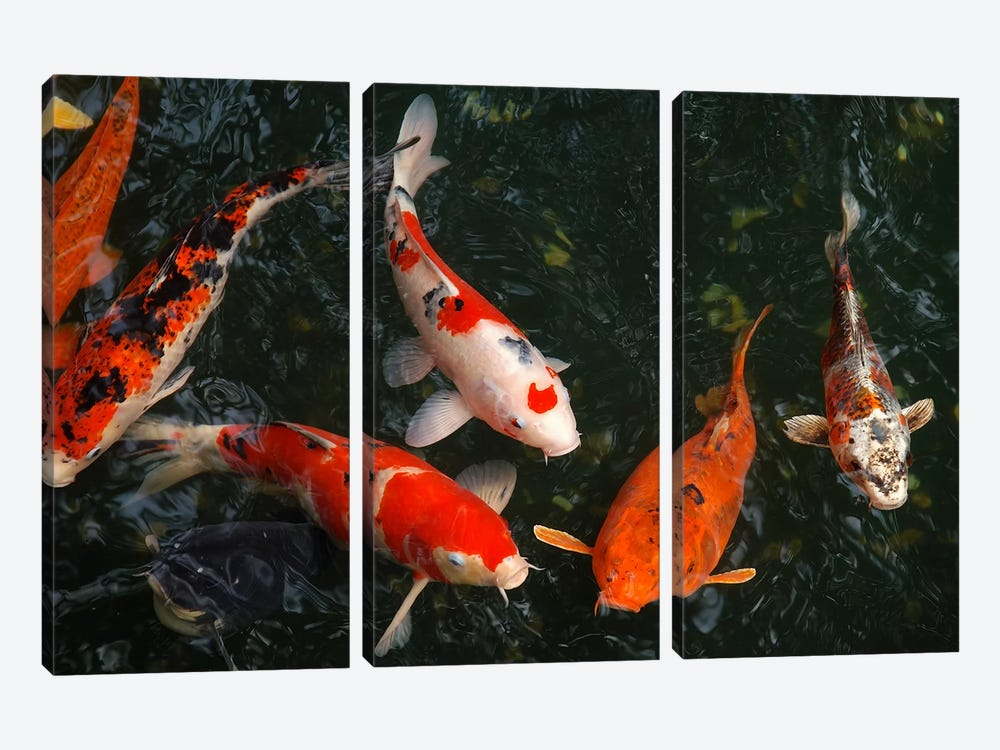 Koi Carp In Japan by Unknown Artist 3-piece Canvas Art Print
