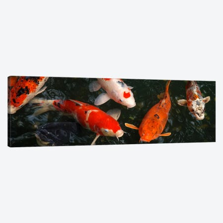 Koi Carp In Japan Canvas Print #21PAN} by Unknown Artist Art Print