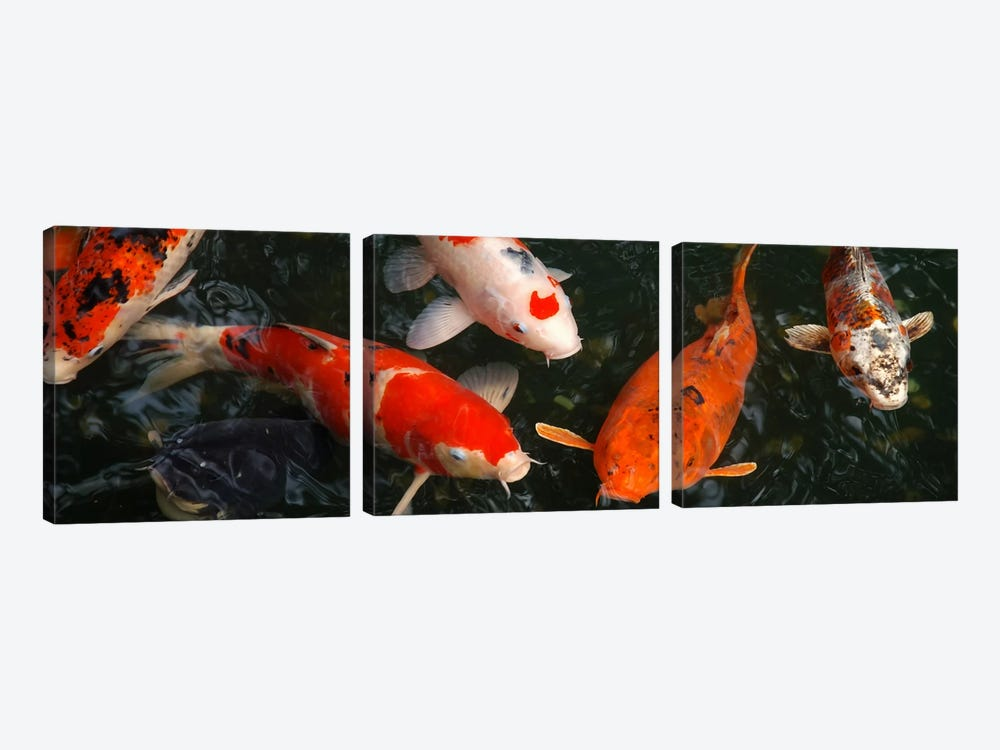 Koi Carp In Japan by Unknown Artist 3-piece Canvas Artwork
