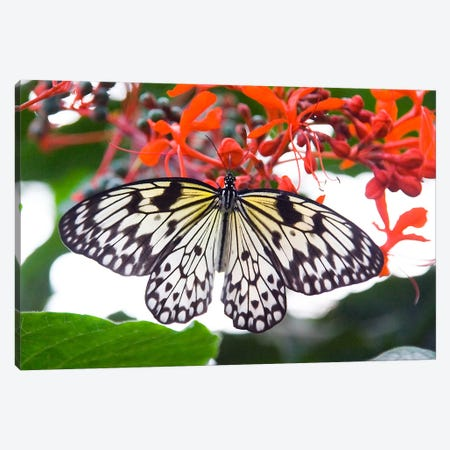 White Butterfly Canvas Print #38} by Unknown Artist Canvas Wall Art