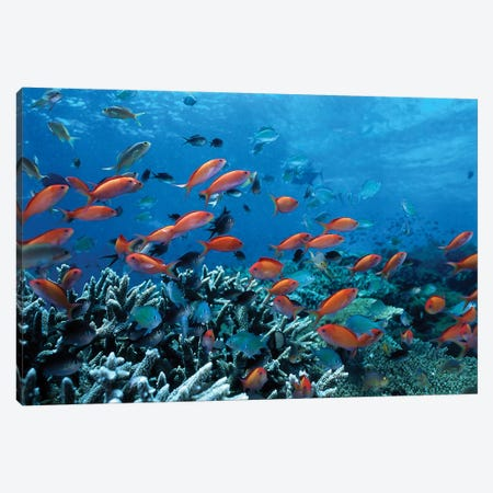 Ocean Fish Coral Reef Canvas Print #40} Canvas Art Print