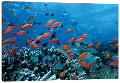 Ocean Fish Coral Reef Canvas Art Print