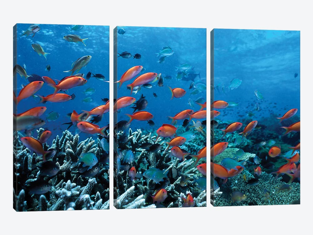 Ocean Fish Coral Reef 3-piece Canvas Artwork
