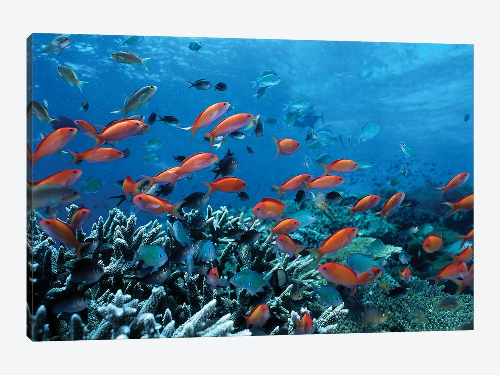 Ocean Fish Coral Reef by Unknown Artist 1-piece Canvas Wall Art