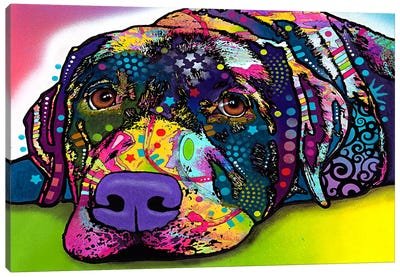 Savvy Labrador Canvas Art Print