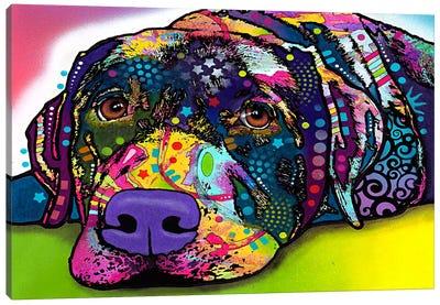 Savvy Labrador Canvas Art Print