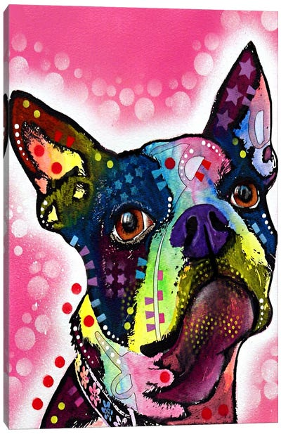 Boston Terrier by Dean Russo Canvas Art Print