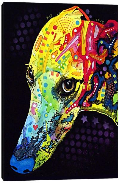 Greyhound Canvas Print #4221