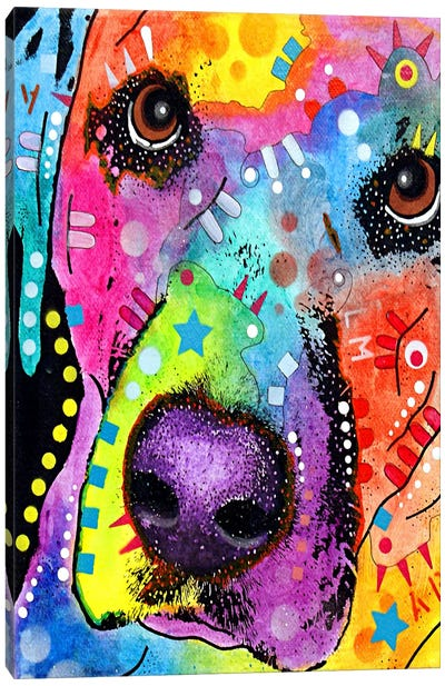 Closeup Labrador Canvas Print #4241