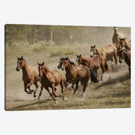 Western Ranch Wild Mustangs Canvas Print #51} by Unknown Artist Canvas Wall Art