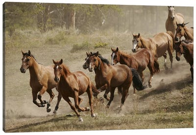 Western Ranch Wild Mustangs Canvas Art Print