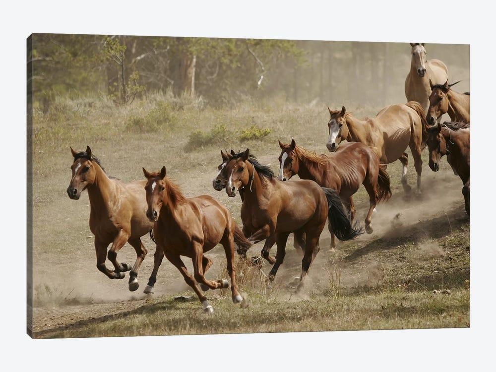 Western Ranch Wild Mustangs by Unknown Artist 1-piece Canvas Artwork