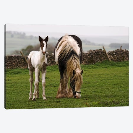 Horses Canvas Print #52} Canvas Artwork