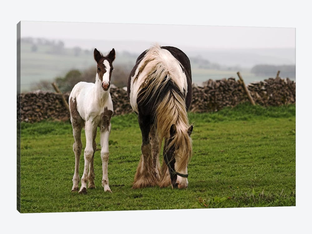 Horses by Unknown Artist 1-piece Canvas Art Print