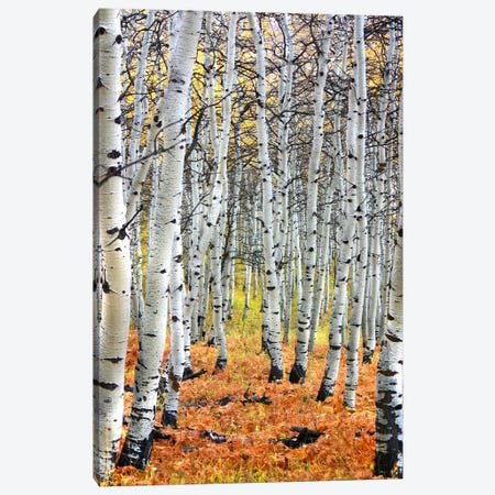 Autumn In Aspen Canvas Print #57} Canvas Print