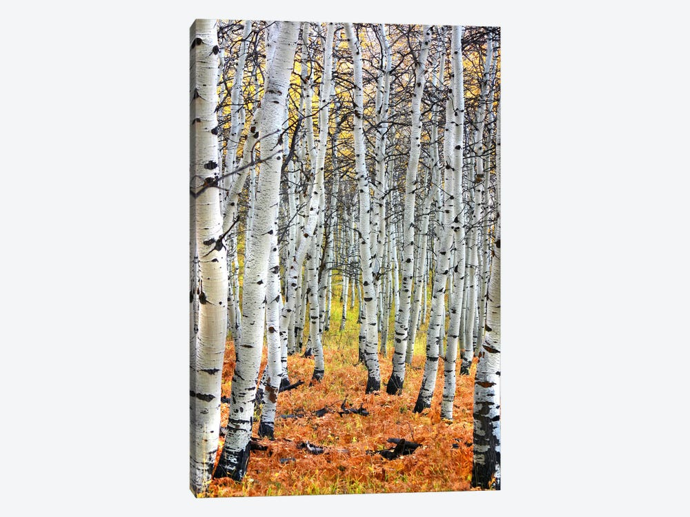 Autumn In Aspen by Unknown Artist 1-piece Canvas Art