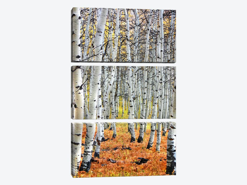 Autumn In Aspen by Unknown Artist 3-piece Canvas Art