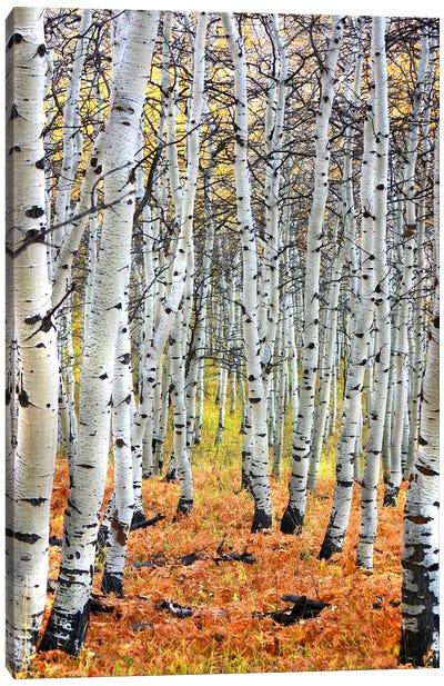 Autumn In Aspen Canvas Art Print