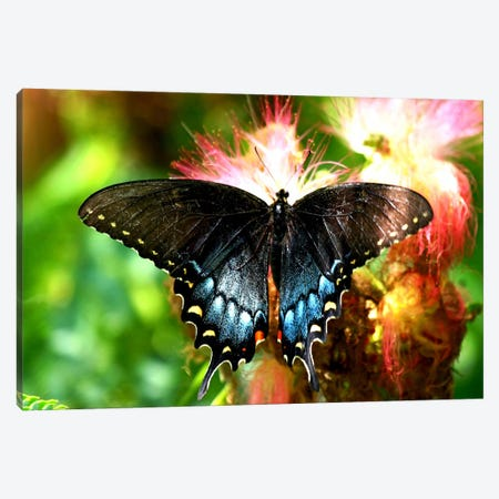 Swallowtail Butterfly Canvas Print #6} Art Print
