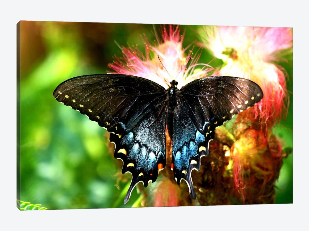 Swallowtail Butterfly by Unknown Artist 1-piece Art Print