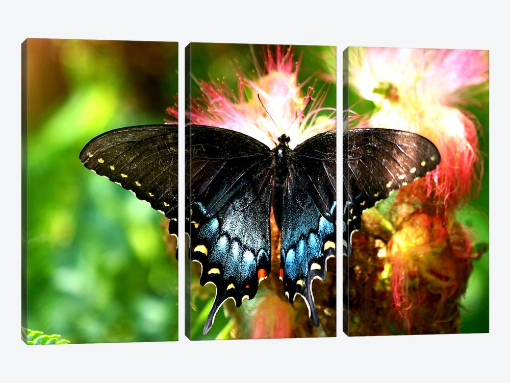 Swallowtail Butterfly by Unknown Artist 3-piece Canvas Print