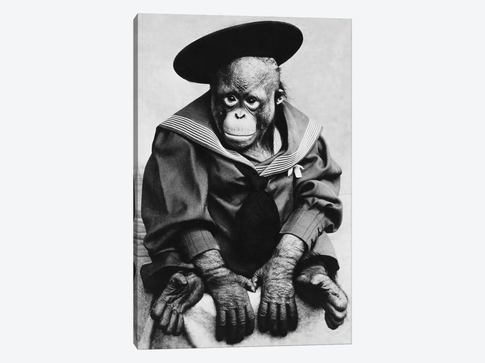 Monkey In Graduation Outfit Vintage Photopgraph by Unknown Artist 1-piece Canvas Art Print