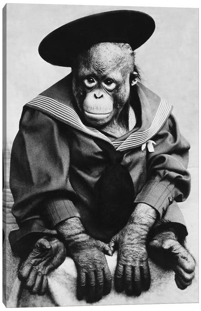 Monkey In Graduation Outfit Vintage Photopgraph Canvas Art Print