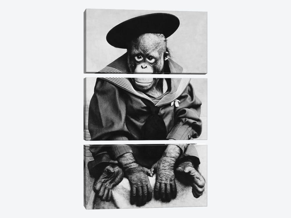 Monkey In Graduation Outfit Vintage Photopgraph 3-piece Canvas Art Print