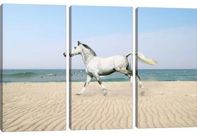 White Horse on The Beach Canvas Art Print