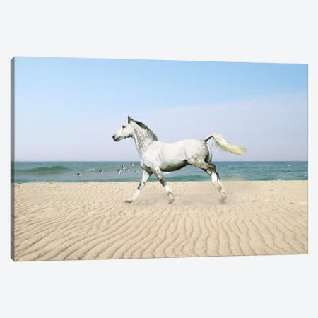 White Horse on The Beach Canvas Print #7034} by Bob Langrish Canvas Artwork