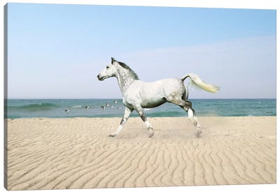 White Horse on The Beach Canvas Art Print