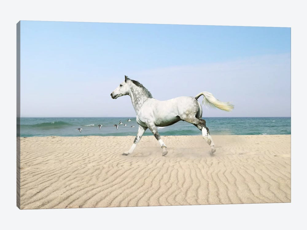 White Horse on The Beach 1-piece Canvas Art Print