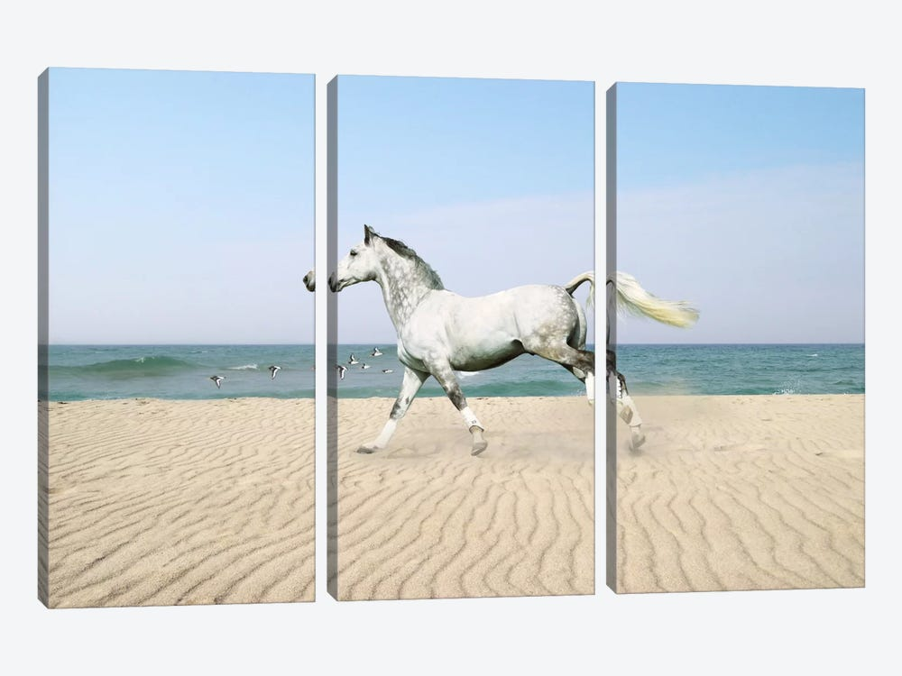 White Horse on The Beach by Bob Langrish 3-piece Art Print