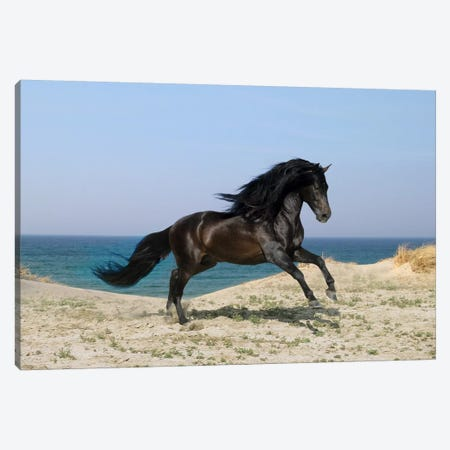 Black Horse on The Beach Canvas Print #7036} by Bob Langrish Canvas Wall Art