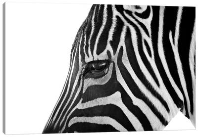 Ignoring Zebra Canvas Art Print
