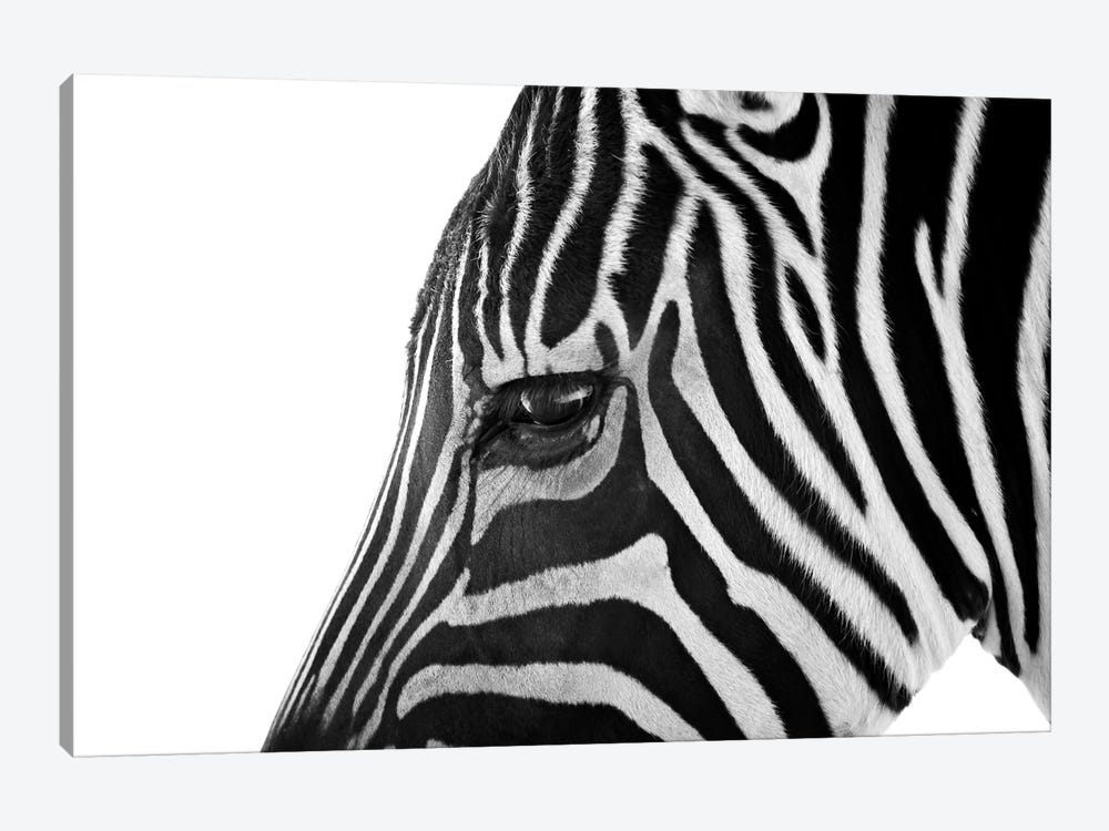 Ignoring Zebra by Bob Larson 1-piece Art Print