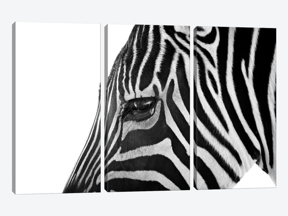 Ignoring Zebra 3-piece Art Print