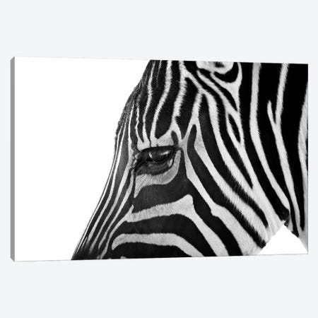 Ignoring Zebra Canvas Print #7041} by Bob Larson Canvas Wall Art