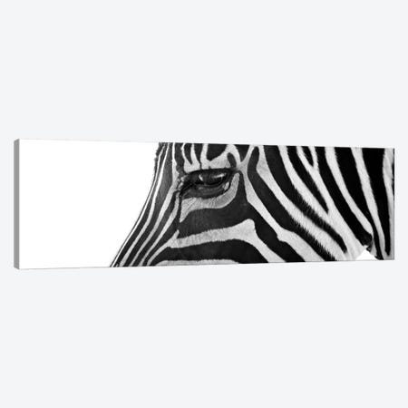 Ignoring Zebra Canvas Print #7041PAN} by Bob Larson Art Print