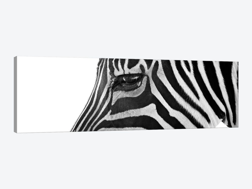 Ignoring Zebra by Bob Larson 1-piece Canvas Print